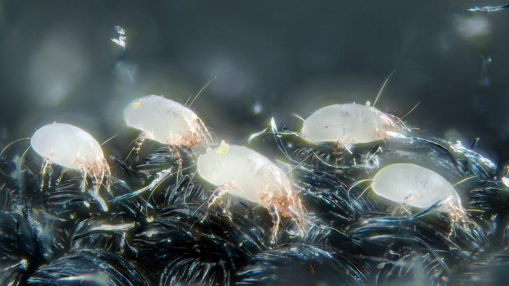 Sanificazione RSA da Virus e Acari della Polvere